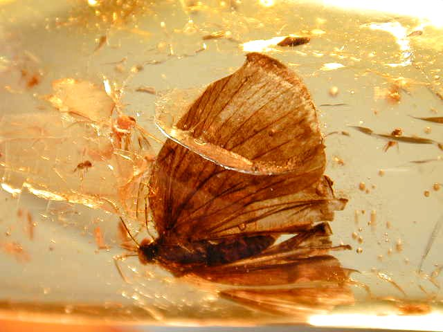 Knowledge Base Natural Inclusions In Amber Amber